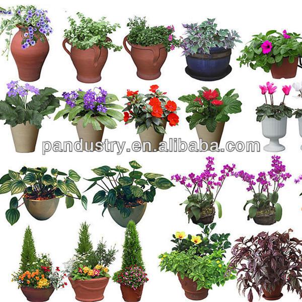 Plantas ornamentales con su nombre for Plantas ornamentales y medicinales