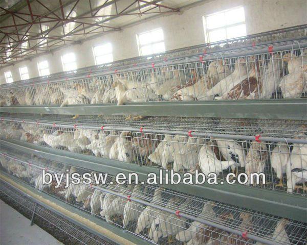 cage pour poules pondeuse buy cage pour poules pondeuse cage poules pondeuse cage pondeuse. Black Bedroom Furniture Sets. Home Design Ideas