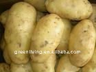 frozen fresh potato export to Russian(best quality and price)