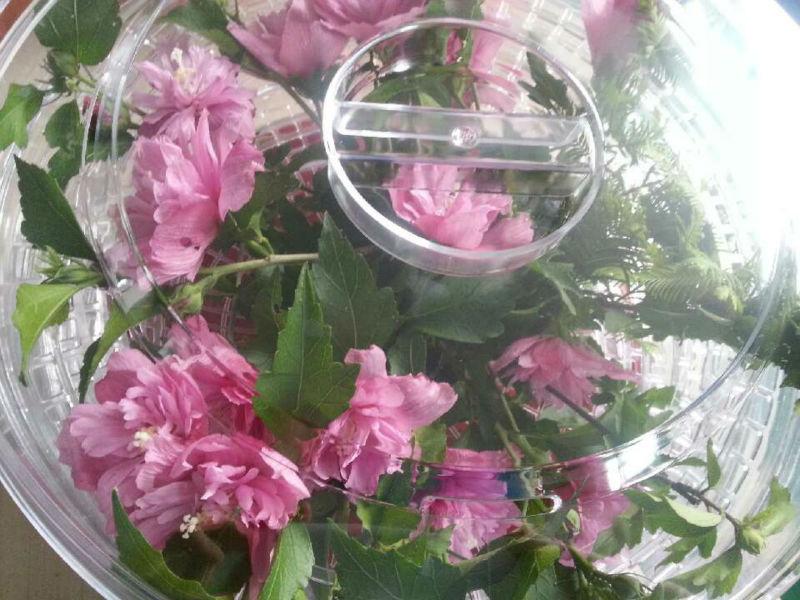 Flower Dehydrator With Fan And Motor Buy Flower