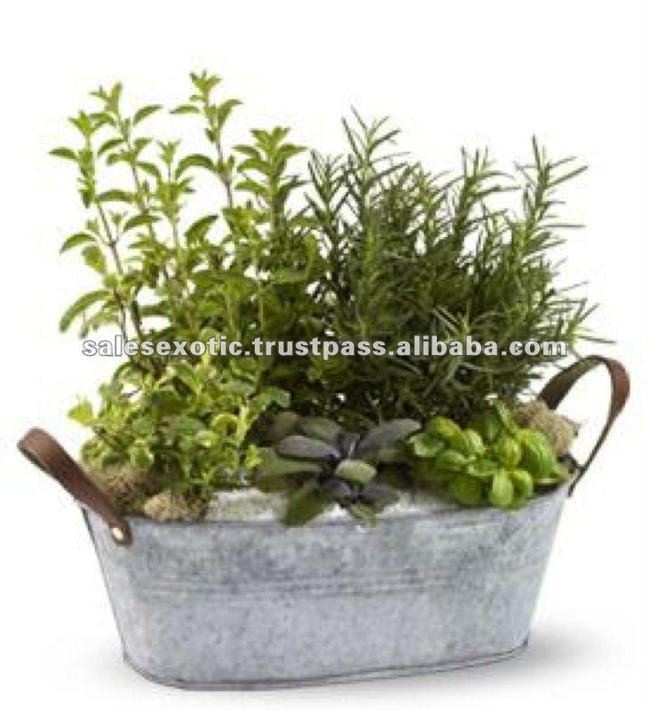 Kitchen Herb Planter Kit Herb Growing Kit Container Garden
