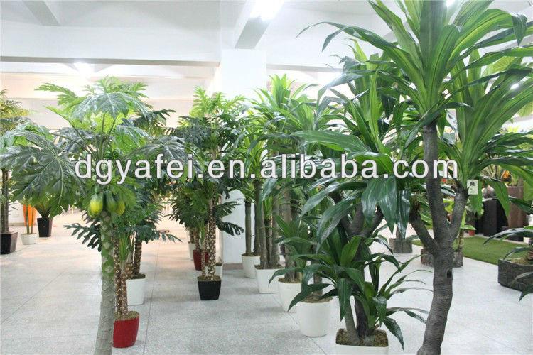large green leaf plants decorativeindoor ornamental plants ...