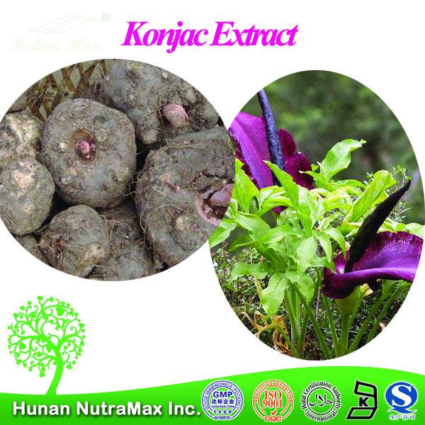 Amorphophallus konjac root