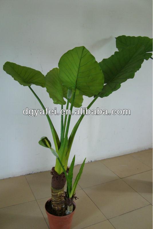 Large green leaf plants decorativeindoor ornamental plants decorativelarge indoor plants for - Green leafy indoor plants ...