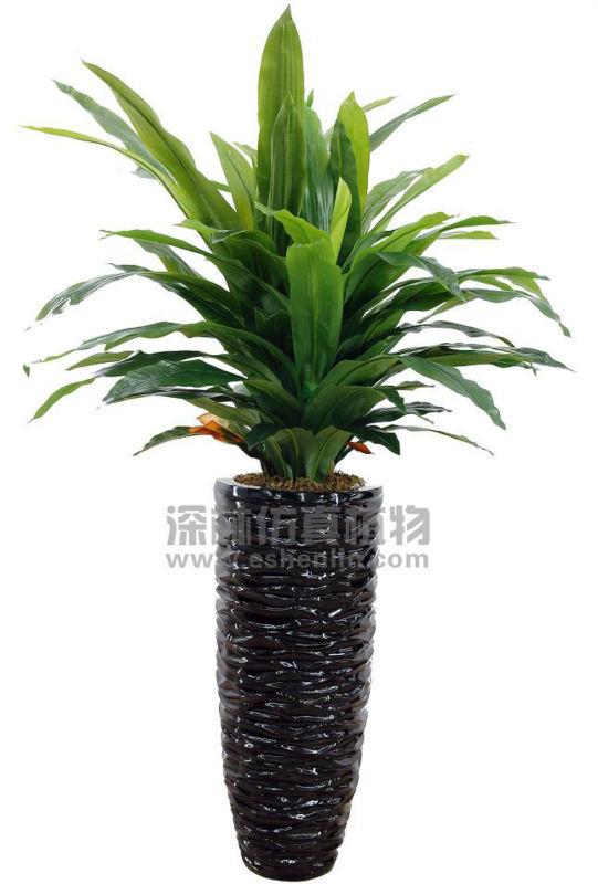 Decorative plastic money tree sale artificial money tree buy plastic money tree large money - Real areca palm ...