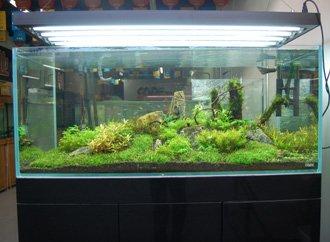 Upgrade Large Or Small Glass Fish Tank Aquarium