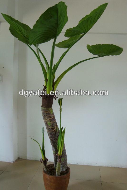 Large Green Leaf Plants Decorativeindoor Ornamental Plants Decorativelarge Indoor  Plants For Sale