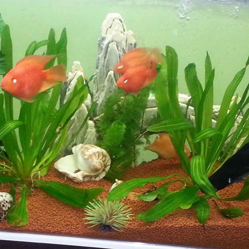 Aqua Clay Pebbles For Plants In Aquarium And Fish Tank