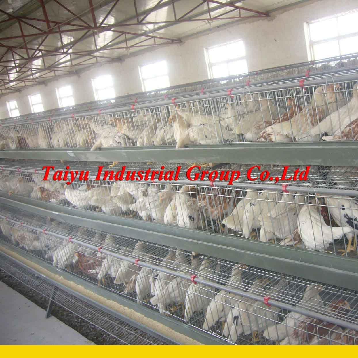 Poultry Chicken Cage Buy Poultry Chicken Cage Chicken