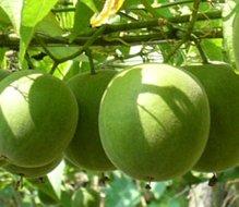 Huir factory Luo Han Guo natural Luo Han Guo organic Luo Han Guo