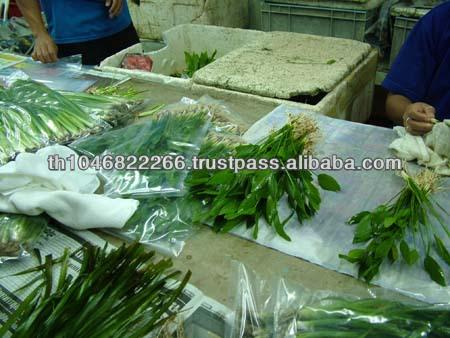 Live Aquatic Plants Anubias Nana