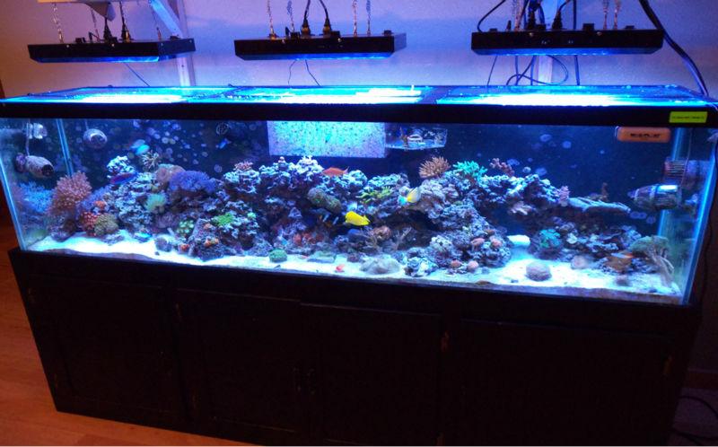 Full Spectrum Led Lights Sea Star Aquariums