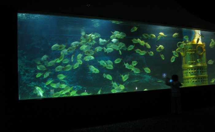 Custom Giant Acrylic Fish Tank For Sale Buy Acrylic Fish