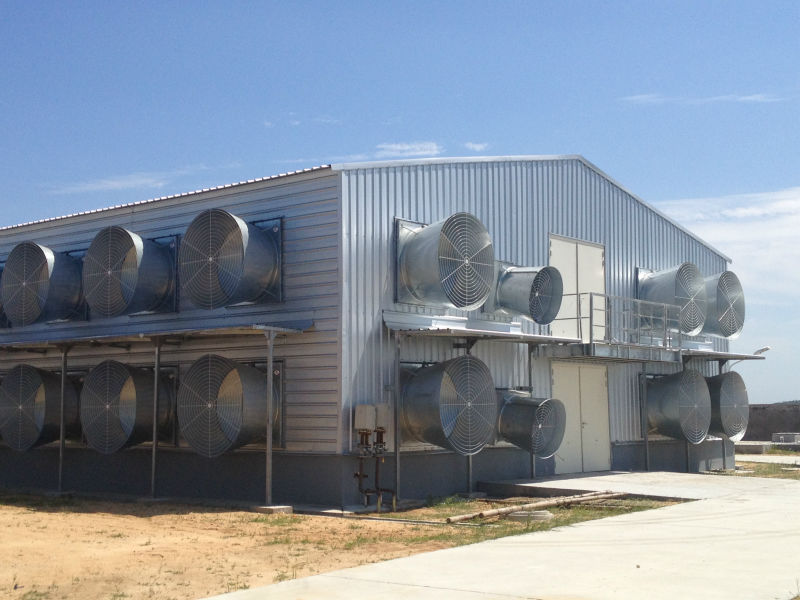 Moder steel poultry shed supplier China