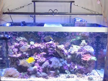 """Dsuny Daisy-chian Fo Rred Sea Marine Fish 48"""" Dimmable Red Sea ..."""