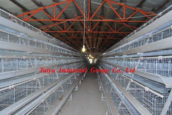 Poultry Farm Construction : Poultry chicken farm building buy