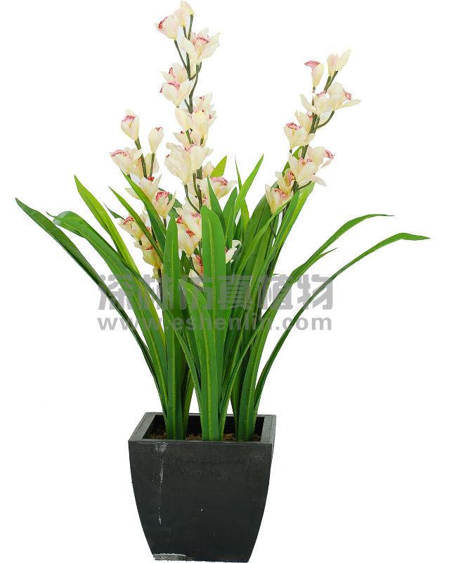 Tipi di slik blu pianta di orchidea in vaso con il fiore for Vaso orchidea