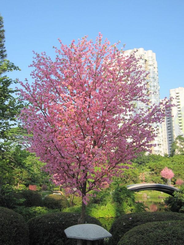Decorative Flowering Trees