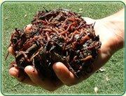 Vermi Compost, Vermi Fertilizer, Vermi Manure
